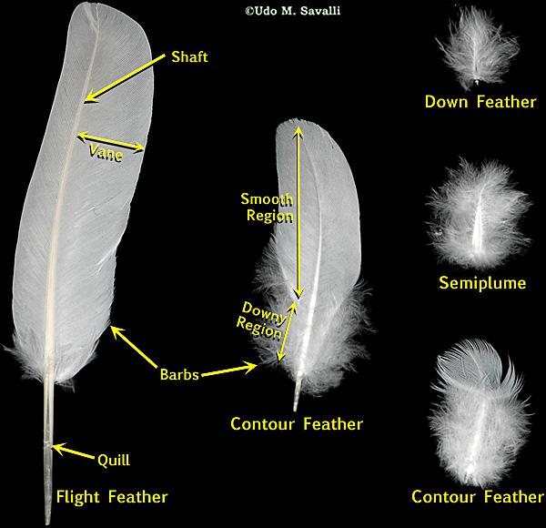 bio113 bird origins. Black Bedroom Furniture Sets. Home Design Ideas